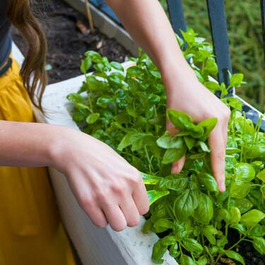 Cómo montar un huerto urbano en casa: qué merece la pena plantar en azoteas y balcones (y qué necesitas)