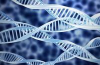 Buenas noticias: descubren el gen mutado que causa la muerte súbita