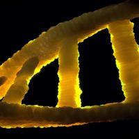Hay dos formas de evolucionar genéticamente: la rápida y la lenta