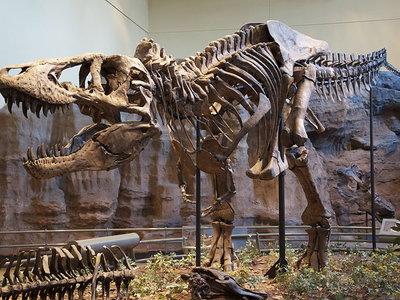 Otra idea de Jurassic Park derribada: el Tyrannosaurus Rex no podía correr