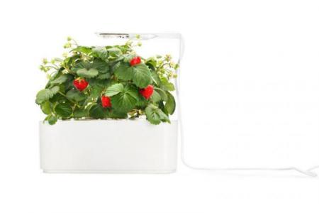 Smartpot, haz crecer tus fresas con tan solo un clic