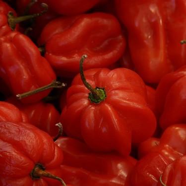 Patentan en Yucatán una nueva especie de chile habanero súper picante