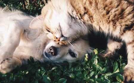 """Mascotas """"antiestrés"""": ¿cómo pueden ayudarnos a gestionar el estrés los animales de compañía?"""