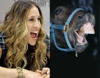 Sarah Jessica Parker ¿cara caballo?