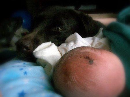 ¿Es peligroso tener un perro si se tiene un bebé?