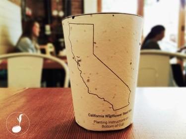 Estos vasos de café son eco amigables, pueden sembrarse después de usarse