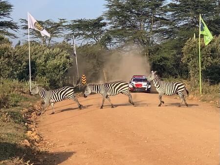 Rally Safari Wrc 2021