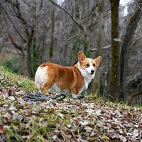 Tener perro se lleva el 9% de un sueldo de 17.482€, el más común en la España de la precariedad