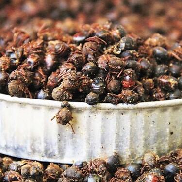 Salsa de chicatanas de Oaxaca. Receta fácil de cocina tradicional mexicana