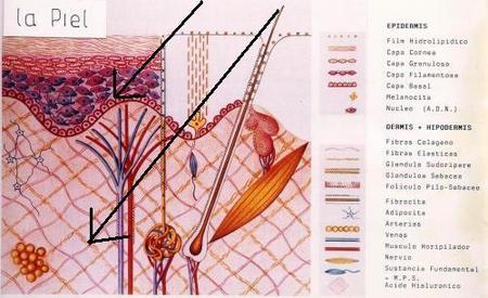 Cabinas de rayos UVA, cuidado con la flacidez además del cáncer