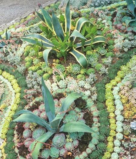 Cactus Paisajista