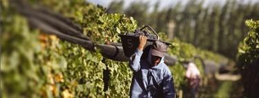 Sin jornaleros no hay recolecta: Huelva y Francia se dirigen a los parados para salvar sus cosechas