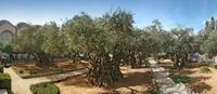 El huerto de Getsemaní: 'demasiada religión para tan poca tierra'