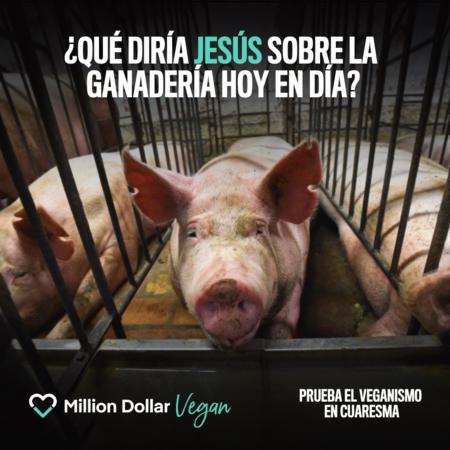 million dollare vegan