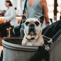 Las ciudades del futuro serán para los perros: ya tenemos más mascotas que niños