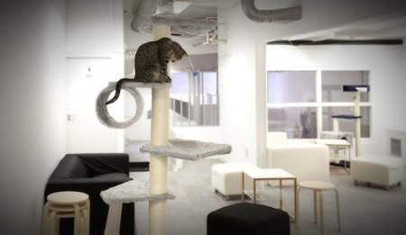 La Gatoteca, el primer Cat Café de Madrid para que digas miau ¡bien alto!