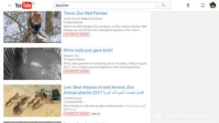 Buscar Videos En Directo