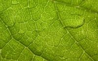 Fotos de Naturaleza, de fondo de pantalla.