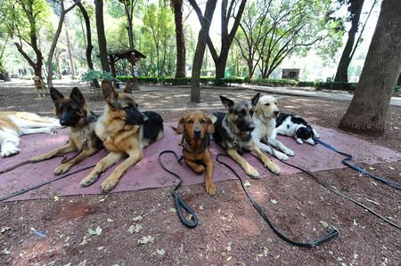Hasta 300 horas de arresto y multas que llegan a los 24,000 pesos para las personas que maltraten animales en Pachuca