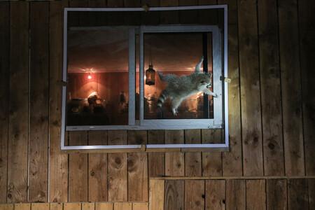 Nicolas De Vaulx How Do You Get That Damn Window Open