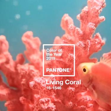 Pantone elige el 'Living coral' como color de 2019 para promover la alegría y la diversión