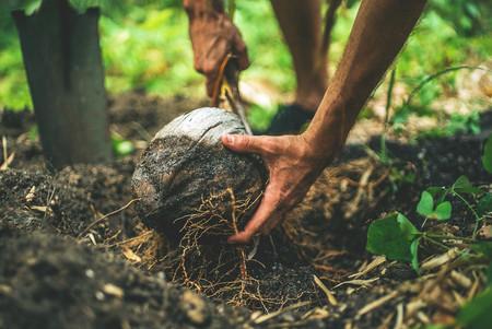 Carrefour, El Corte Inglés y Mercadona se apuntan a la moda saludable del aceite de coco