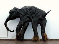 El bebé mamut