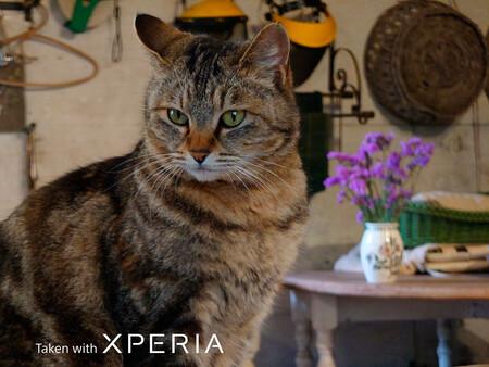 Sony Xperia 1 Iii Animal Eye Af Camera Samples