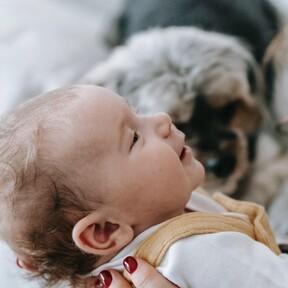 Detectar la pérdida auditiva en el recién nacido con solo una gota de sangre