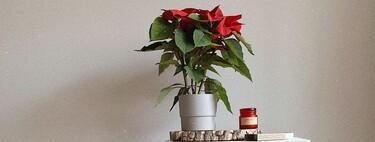 21 ideas para decorar nuestra casa con la flor de Pascua (y no en todas necesitas la planta)