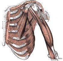 ¿Cómo se contraen los músculos?