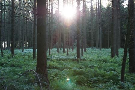 Estas plantas serán capaces de capturar más CO2 de la atmósfera
