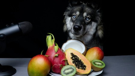 Los vídeos ASMR alcanzan su máximo nivel: perros comiendo frutas