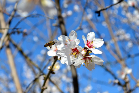 Ni los kiwis ni las almendras ni los aguacates son veganos. Y la culpa es de las abejas