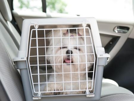 Perro en un transportin