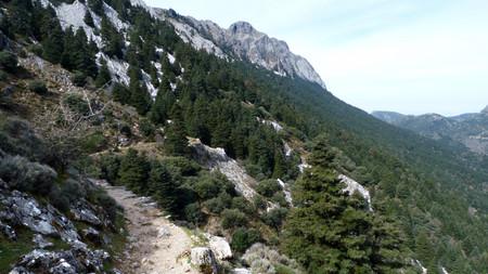 Ruta Del Pinsapar