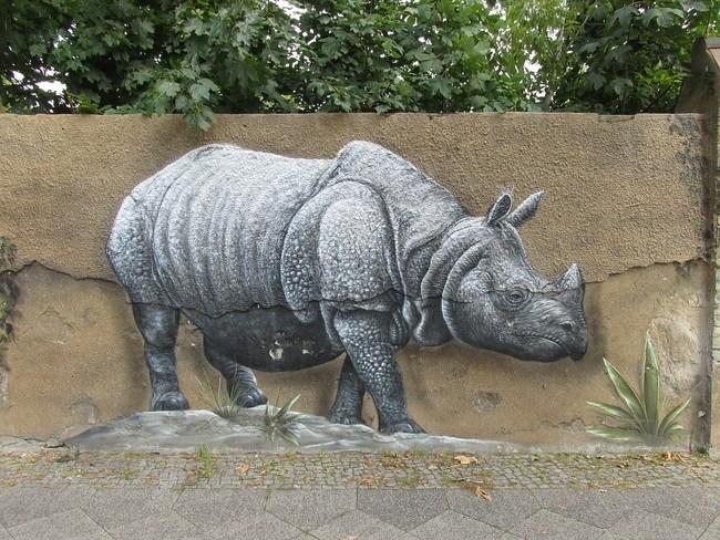 Animal Rhino Zoo Nature Wall Berlin Wall Art 2736240