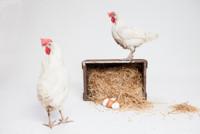 Algunos datos importantes y curiosos del huevo