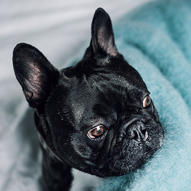 ¿Quién dijo que los accesorios de tu mascota no pueden ser elegantes? La colección Hanniko ofrece diseño para tu mascota y tu casa