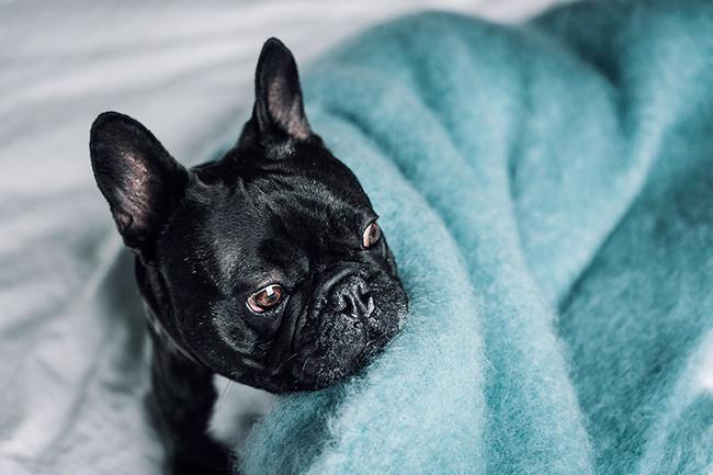 Hanniko Design Customize Blue Kare Dog Blanket Wool Photo 3 1