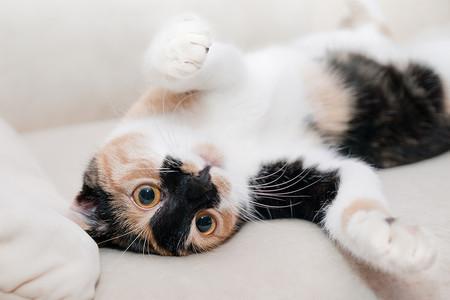 Como Fotografiar Mascotas I Gatos 2