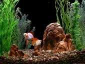 GoldFish Aquarium 2.0, tu acuario virtual