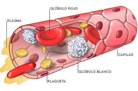 La sangre: todo lo que necesitas saber (y II)