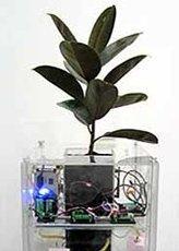 Un robot-planta que crece con Wall Street