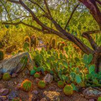 Desert Botanical Gardens (Estados Unidos)