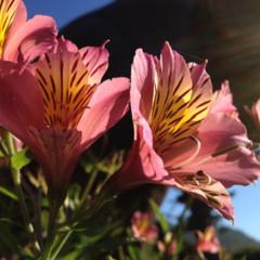 Foto 4 de 5 de la galería camara-iphone-4s en Applesfera