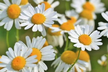 Flor9