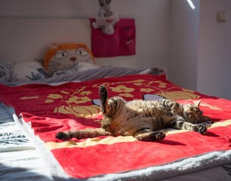 Los beneficios científicamente probados de echar la siesta después de comer