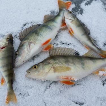 Cómo congelar pescado y marisco en casa de manera correcta y segura