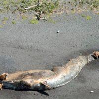 ¿Qué está pasando en Alaska? Más de 30 ballenas muertas y aún se desconoce la causa